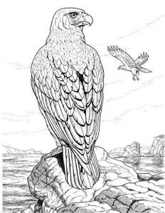 Раскраски антистресс животные птицы