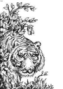 Раскраски антистресс животные тигр