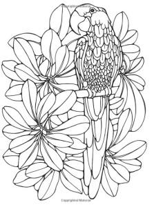 Раскраски антистресс животные попугай