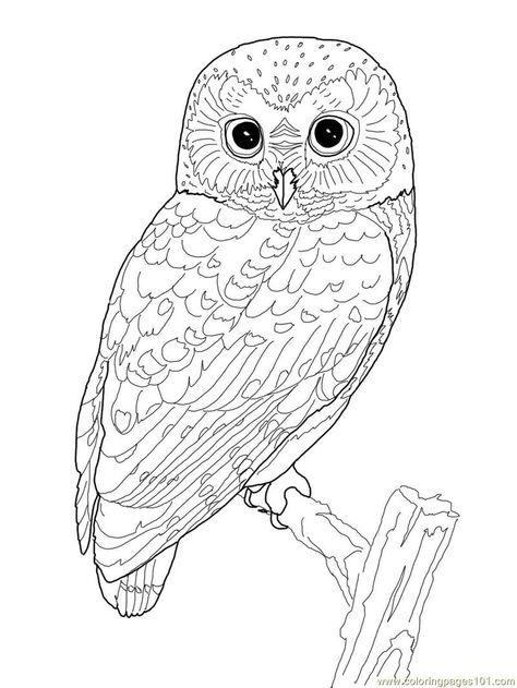 Раскраски совы - 8