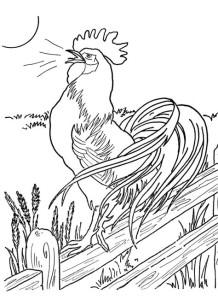 Раскраски антистресс животные петух