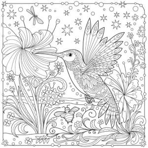 колибри раскраска антистресс