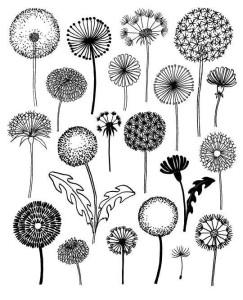цветы для срисовки карандашом