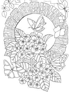 бабочки картинки раскраски